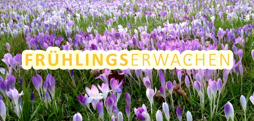 OPENMINDYOGA Workshop Frühlingserwachen am 24.3.2019 in der printarena Hamburg